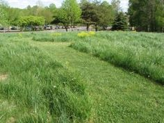 New River Gorge Bridge Visitor Center. WV. A meadow replaces most of the lawn. © Beatriz Moissset