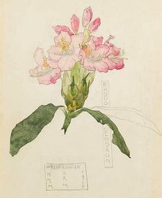 Charles Rennie Mackintosh (1868-1928):  'Rhododendron' (In Memory of my Mum-Mum)