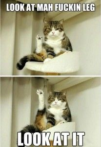 funny cat, look at my leg