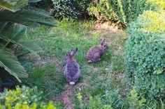 Lokrum baby rabbits