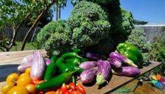 Orto in giardino: consigli per iniziare
