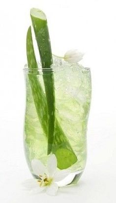 Aloe vera juice may be a terrific remedy for fighting acid reflux. Use whole alo… Aloe vera juice may be a terrific remedy for fighting acid reflux. Use whole aloe vera and crack it. Make Natural, Natural Cures, Natural Healing, Detox Drinks, Healthy Drinks, Healthy Nutrition, Healthy Food, Health Remedies, Home Remedies