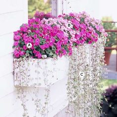 Shady Window Box :  A. Impatiens 'Accent Pink' -- 4  B. Impatiens 'Pink Swirl' -- 4  C. Dichondra 'Silver Falls' -- 6 julianne430