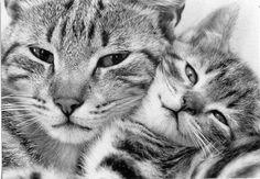 /chats  de gouttieres