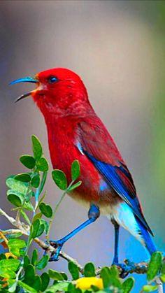 World Birds, All Birds, Cute Birds, Pretty Birds, Little Birds, Exotic Birds, Colorful Birds, Beautiful Creatures, Animals Beautiful