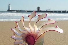 Aquarium Ornaments, Shell Ornaments, Sea Shells, Conch Shells, Present Gift, Nature Crafts, Birthday Presents, Snails, Gifts
