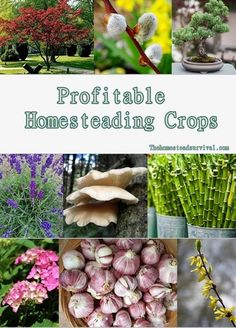Make money on your homestead with these profitable homesteading crops. A lot of these plants can be grown in very little space. So even if you don't have a big homestead you can probably make a profit growing them in containers or your backyard. When it comes to homesteading you are always looking for ways to help do