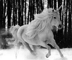 """As a child I was obsessed with unicorns.it wasn't until I read Pratchett's """"Lords & Ladies"""" that I realized unicorns are one the fiercest animals around. Unicorn And Fairies, Real Unicorn, White Unicorn, Magical Unicorn, Unicorn Horse, Majestic Unicorn, Unicorn Fantasy, Unicorn Hair, Magical Creatures"""