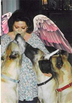 The angel wings in this photo are so fitting! Linda Ardnt is someone that I truly wish I could have met. What an amazing woman.... What a legacy she leaves behind. What amazing knowledge she has given to the dog world. Anyone that owns a Great Dane, large breed dog, or any dog...should read her website backwards and  forward...the great dane lady.com. How lucky we were to have had her...how sad she left the world so soon.  God bless you Linda.... And thank you for being here!!!!!