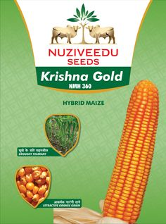 Krishna Gold