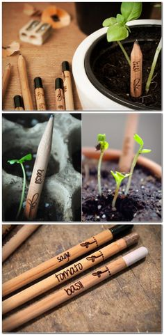 Sprout is a pencil that wants to be a plant when it grows up. When it's too short to use, plant Sprout to grow herbs, flowers and more!