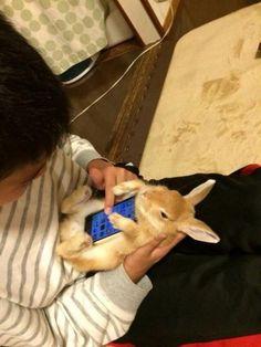 Nuova moda in Giappone... Conigli veri come cover per gli smartphone! AHAHA