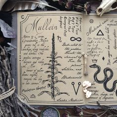Mullein The Hedge Witchs Herbal Grimoire written by Alison Garber Native Apothecary and Adrienne Rozzi Poison Apple Printshop Screenprinted and bound by hand limited edi. Wiccan, Magick, Hedge Witchcraft, Witchcraft Books, Arte Sketchbook, Harry Potter, Witch Aesthetic, Practical Magic, Coven