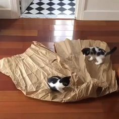 Kittens love playing with paper – Cool Cat Tree House - Süße Katzen 2020 Funny Animal Videos, Cute Funny Animals, Cute Baby Animals, Funny Dogs, Funny Humor, Cats Humor, Funny Babies, Wild Animals, Cat Memes