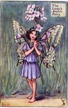 The Lady's-Smock Fairy (Réti kakukktorma) Flower Fairies Books, Cicely Mary Barker, Nature Drawing, Garden Journal, Vintage Holiday, Vintage Flowers, Vintage Prints, Faeries, Smocking