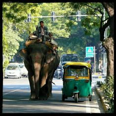 Normal street in India.also along with the auto rickshaws, bicycles, huge trucks, cars, and the occasional cow Goa India, India And Pakistan, Huge Truck, Asia, Amazing India, India Culture, Varanasi, India Travel, Belle Photo