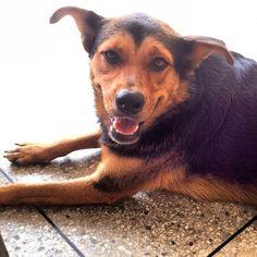 #dog #UC