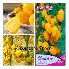 true Chinese Cherry Tomato Mini Yellow vegetables fruit bonsai tree plant home & garden real factory package. Category: Home & Garden. Fruit Decoration For Party, Fruit Decorations, Fruit Seeds, Tomato Seeds, Vegetable Lunch, Yellow Vegetables, Wedding Snacks, Fruit Packaging, Fruit Shop