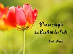 blumen sprüche kurz Die 12 besten Bilder von Blumen | Quotes, Beautiful Words und  blumen sprüche kurz