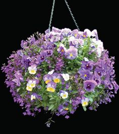 hanging baskets full sun | Hanging Basket with Angel Moss planted in pansies