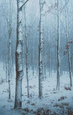 Moody winter forest in North Zealand, Denmark. A moody winter forest in North Ze , #AFFILIATE, #North, #Zealand, #forest, #Moody, #winter #ad
