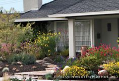 Homeowners are recognizing the value of replacing front lawns with native plants