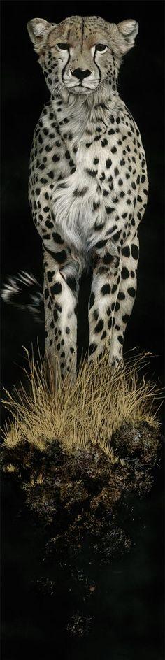 ^Cheetah