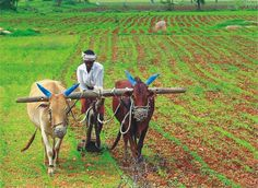 Image result for indian agriculture