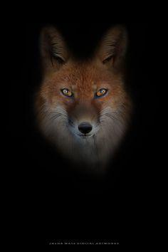 Best of 500px — ~ Fox ~ by Jasna Matz