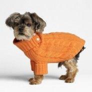 Dog With an Orange Sweater
