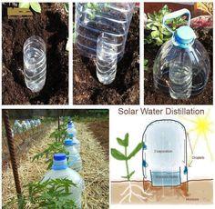 Per una buona coltivazione è indispensabile una buona innaffiatura, infatti la giusta quantità d'acqua permette alle piante di svilupparsi al meglio in ogn