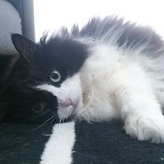 4年前のビット💕 会いたいな…😘 #猫 #ビット#ペルシャ#今は亡き#愛猫 #会いたい#ねこ#cat #猫大好き #多頭飼い #愛してるよ