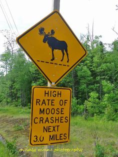 moose crossing~Yikes!