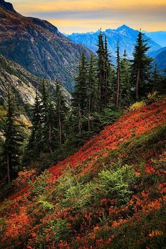 North Cascades National Park, Washington.I want to go see this place one day.Please check out my website thanks. www.photopix.co.nz