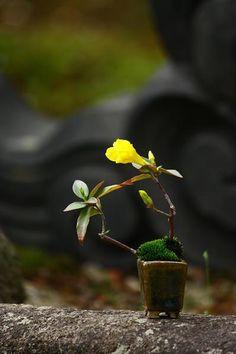 チョコレート盆々-花・花・花