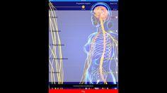 Case of Atrial Fibrillation - energetic balancing Atrial Fibrillation, Neon Signs, Day, Life