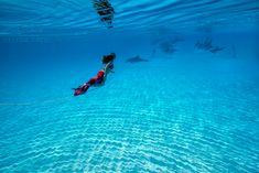 Aqua Photography: red mermaid & dolphin  (via blog: Elenakalis.squarespace.com)