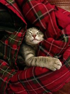 All toasty warms~Scottish fold? (it's a joke people, no comments!)