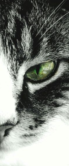 #Cats eye #design in my #etsy shop: Cat's Eye   Ideal for canvas prints   Tote bag   T-shirt   Throw Pillows   Floor Pillows   Mugs   Phone Skins   Cushions   Kindle Covers   http://etsy.me/2hRVGpx #catseye #totebags #tshirts #pillows #lovecats