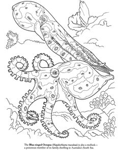 Blue-ringed Octopus Coloring Page  (Dover Publications)
