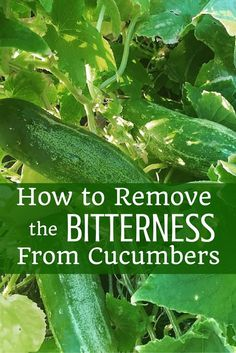 Are your cucumbers always bitter? Try this age-old trick to removing the chemical (cucurbitacin) that makes them turn bitter.
