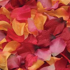 Lillian Rose 250-Piece Fall Rose Petals, Assorted Colors >>> Click image to review more details.