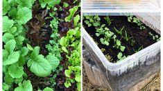 Lag en salatbar-jordfabrikk Lag, Garden, Plants, Garten, Flora, Plant, Lawn And Garden, Outdoor, Tuin