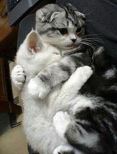 C'est a moi. Snuggly cats ♡
