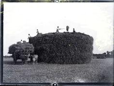 La moisson sur le plateau de Saclay entre 1895 et 1905