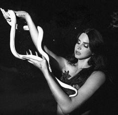 Lana del rey Tropico Snake