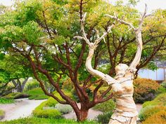 Fort Bragg Attraction: Mendocino Coast Botanical Gardens | FortBragg.