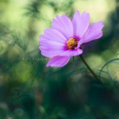 Dear Spring by ~Karisca on deviantART