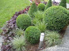 Szmaragdowy Zakątek - strona 270 - Forum ogrodnicze - Ogrodowisko