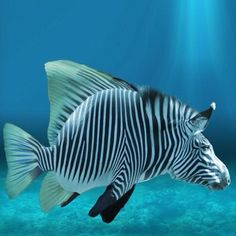 Finally they can take pictures of the real zebra fish – funny photoshop Beautiful Sea Creatures, Deep Sea Creatures, Tropical Fish Pictures, Photoshopped Animals, Animal Mashups, Salt Water Fish, Cool Fish, Water Animals, Underwater Creatures